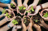 Développement durable en Égypte. Planter 1 million d'arbres fruitiers