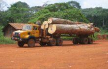 Cameroun : 73% bois vendu sur le marché intérieur domestique échappe au contrôle légal, selon la FAO